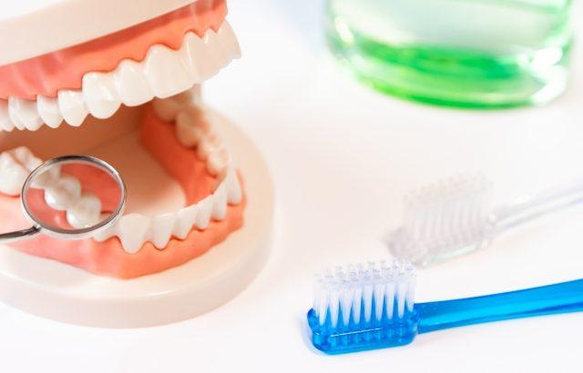 歯並びを相談するなら、歯医者選びが大切!